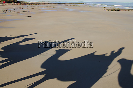western australia broome cable beach early