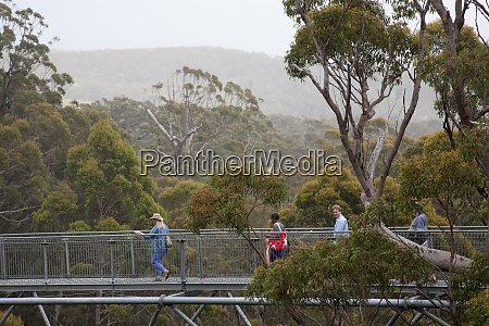tourists enjoy valley of giants treetop