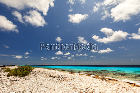 shoreline of bonaire