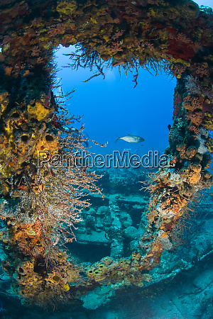 wreck of the rms rhone iron