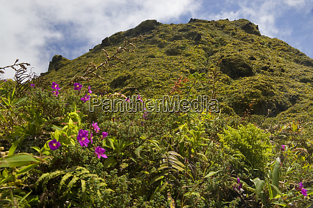 martinique french antilles west indies low