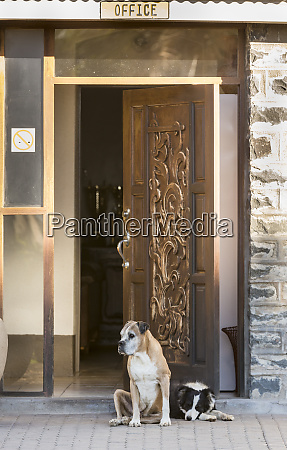 africa namibia dogs at door entrance