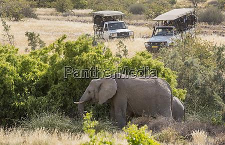 africa namibia damaraland palmwag safari vehicles