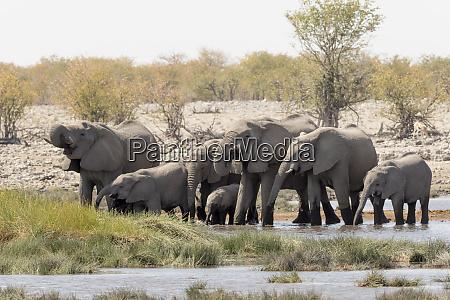 africa namibia etosha national park family