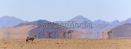 africa namibia namib naukluft park oryx