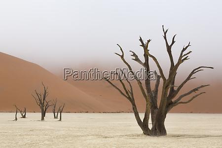africa namibia namib naukluft park deadvlei