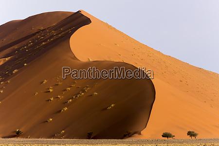 africa namibia namib naukluft park giant
