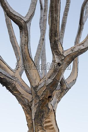 africa namibia keetmanshoop pattern of quiver