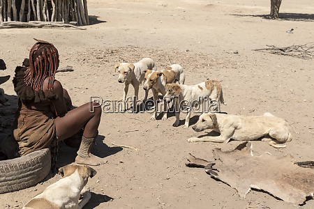 africa namibia opuwo dogs waiting for
