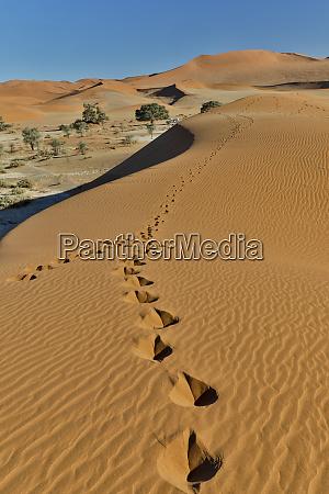 sand ripple patterns in the desert