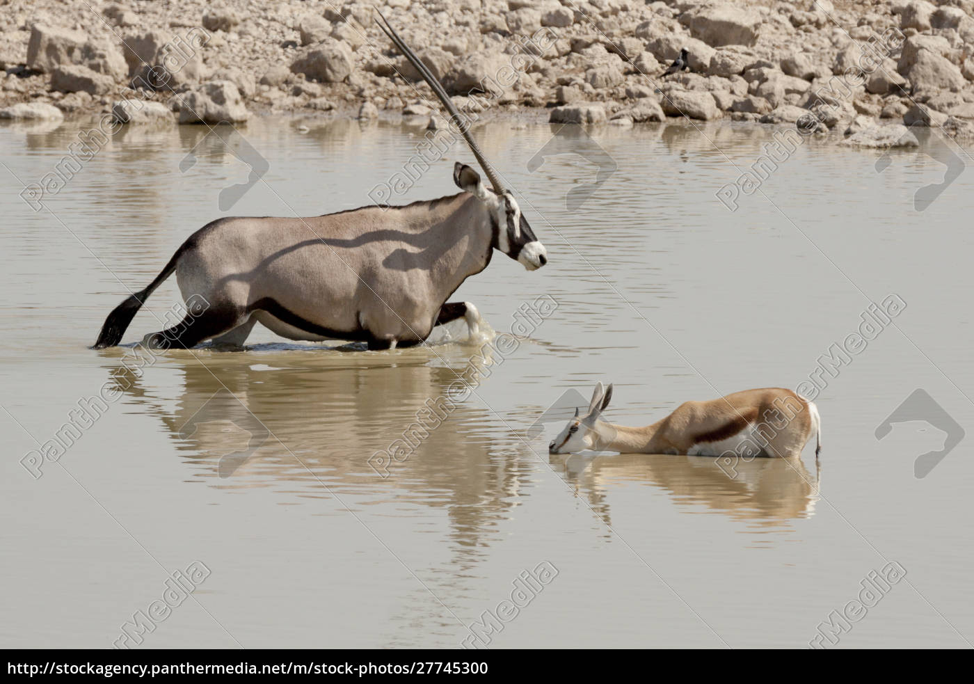 africa, , namibia, , etosha, national, park., oryx - 27745300