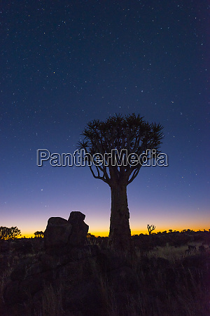 africa, , namibia., twilight, in, a, quiver - 27745620