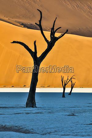 africa namibia sossusvlei dead acacia trees