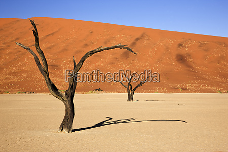 africa namibia namib naukluft national park