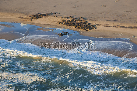 seal colony on skeleton coast namibia