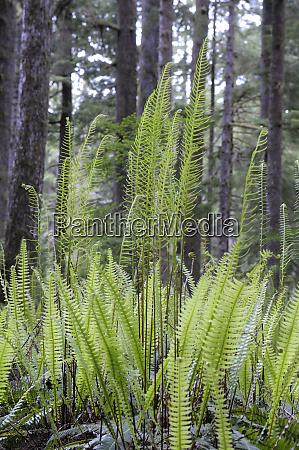 canada british columbia carmanah walbran provincial
