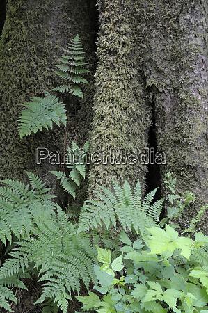 canada british columbia ferns and mosses