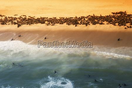 skeleton, coast, , namibia., abstract, view, of - 27746320