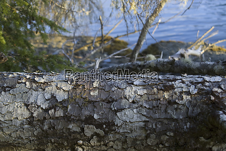 bark detail on keith island broken