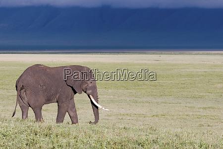 ngorongoro crater tanzania africa a lone