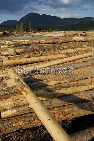 canada canal flats tembec lumber