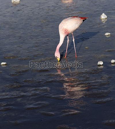 a photo of beautiful flamingo in