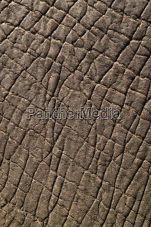 elephant skin zimbabwe