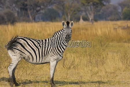 okavango delta botswana africa profile view