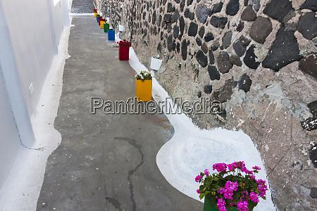 flower pots in the narrow lane