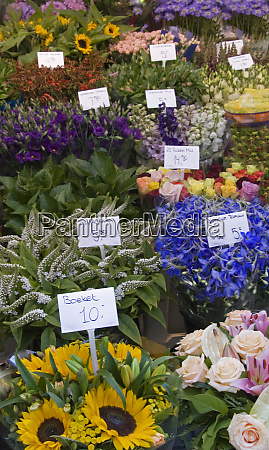 a colorful variety of flowers at