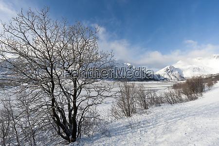 a frozen fjord near svolvaer lofoten