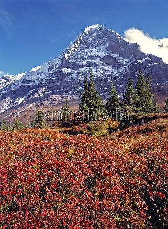 europe switzerland eiger vibrant red foliage