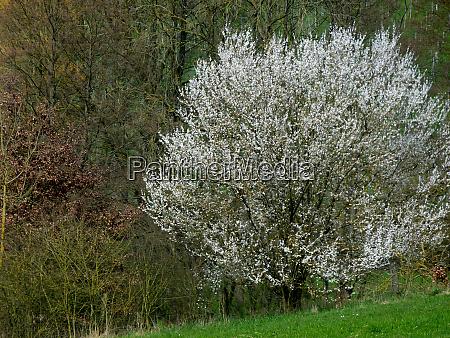 white flowering tree on the edge
