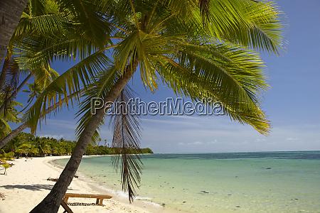 beach and palm trees plantation island