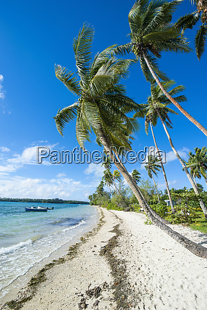 palm fringed white sand beach on