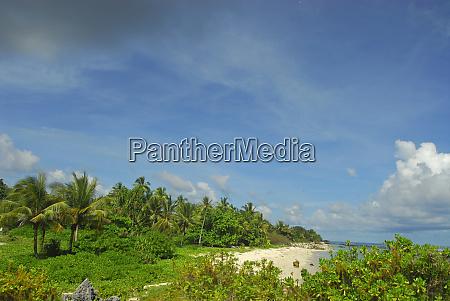 lush, vegetation, bording, a, white, sand - 27769100