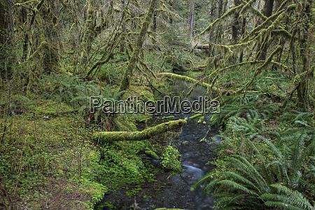 taft creek in olympic national park