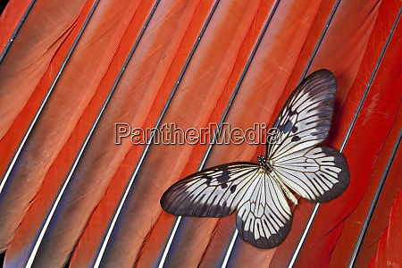 paper kite tropical butterfly on scarlet