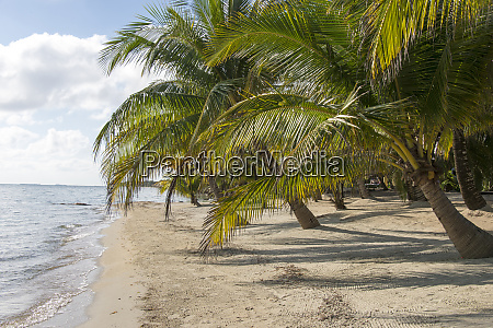 placencia belize roberts grove resort groomed