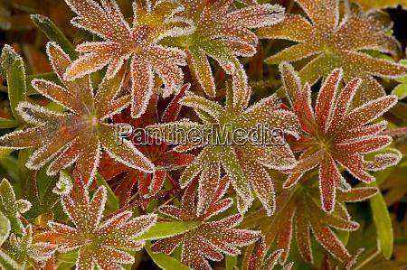 frost on orange autumn ground cover