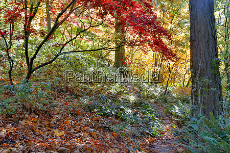 japanese maples and fir trees in