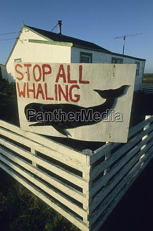 falkland islands sea lion island anti