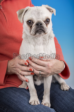 white pug puppy sitting on the