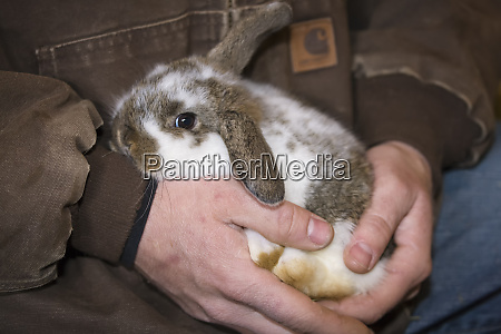 lop eared bunny being held tenderly
