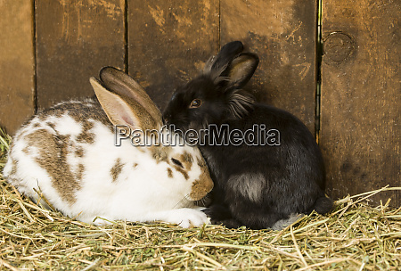 soft furry bunnies huddled together to