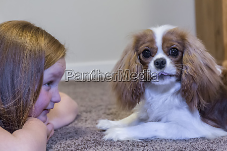 cavalier king charles spaniel puppy with
