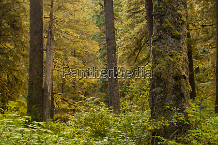usa alaska tongass national forest forest