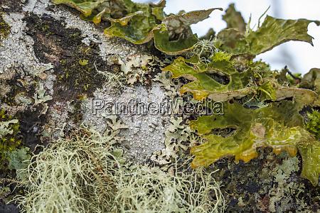 usa alaska a variety of lichen