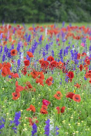 poppy field mount olive north carolina