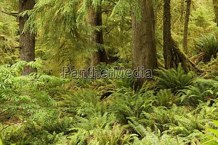 lush forest and ferns ecola state